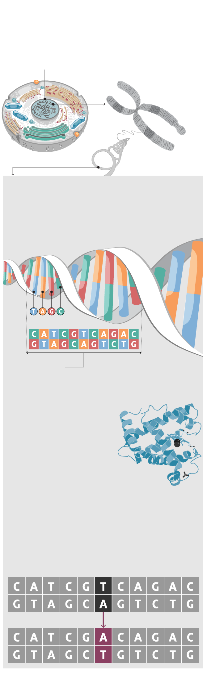 s in the code: Why mapping your DNA may be less ... Genetic Mapping Cost on dna mapping, community mapping, thomas morgan's linkage mapping, cognitive mapping, mental mapping,
