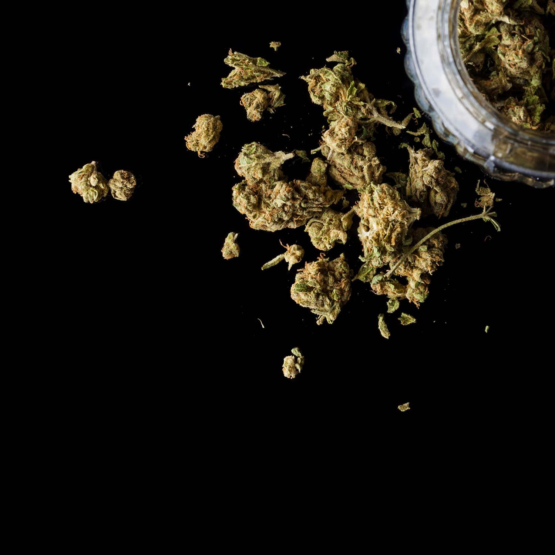 Cannabis leaves on black