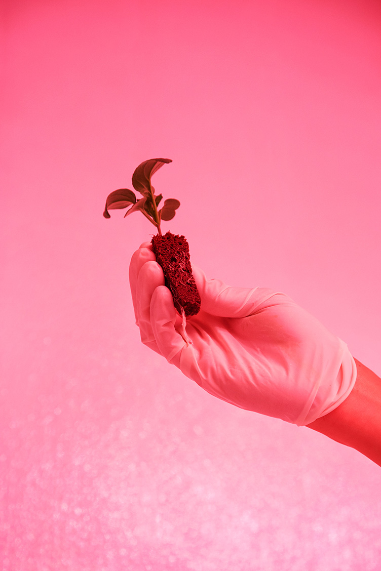 a persons hand wearing a rubber glove holds up a seedling with its roots shown