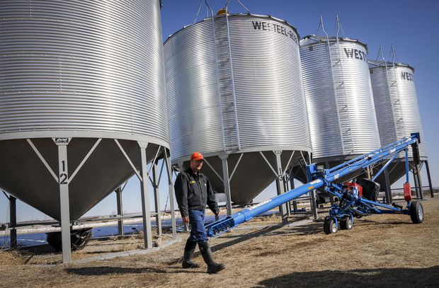 Grain industry leaders cast doubt on China's claims of tainted Canadian canola