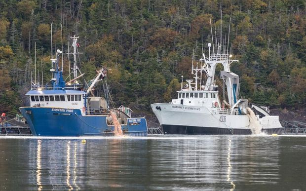 N.L. government urged to reassess aquaculture expansion after mass die-off at salmon farm