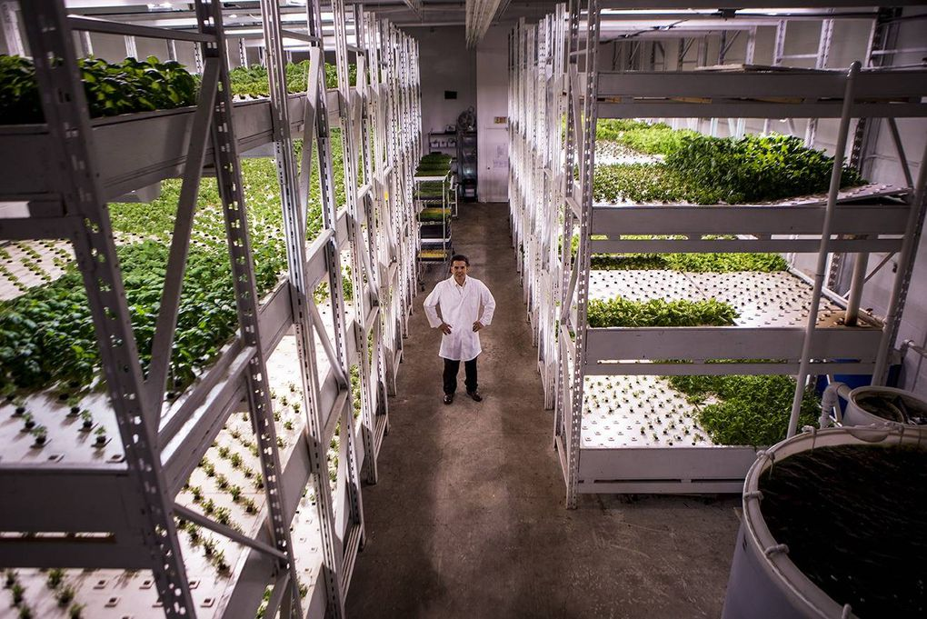 In Pictures: Fish and edible greens thrive in urban aquaponics venture