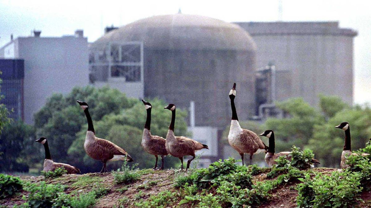Canada geese stand near the Ontario Hydro Pickering nuclear power station, listed by a U.S. State Department cable as a site critical to American interests.