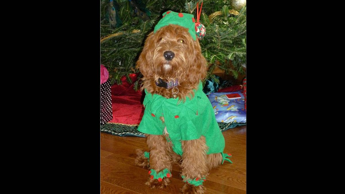 Daisy Walsh is a six-month-old mini golden doodle. She was very excited to see Santa!