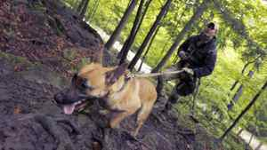 Tier1 K-9 co-owner Kevin Whitenect, a former soldier, works with Kali, a Belgian Malinois during training at an unnamed location in Ontario.