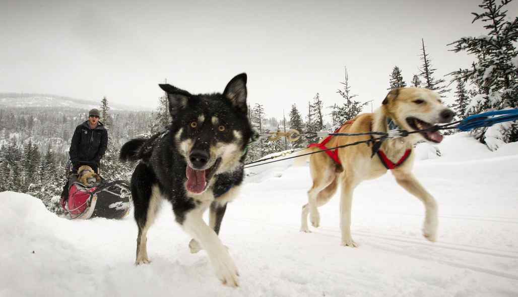 A team of sled dogs from Canadian Sled Dog Adventures make their way along a trail in the Calan Valley near Whistler January 16, 2012.