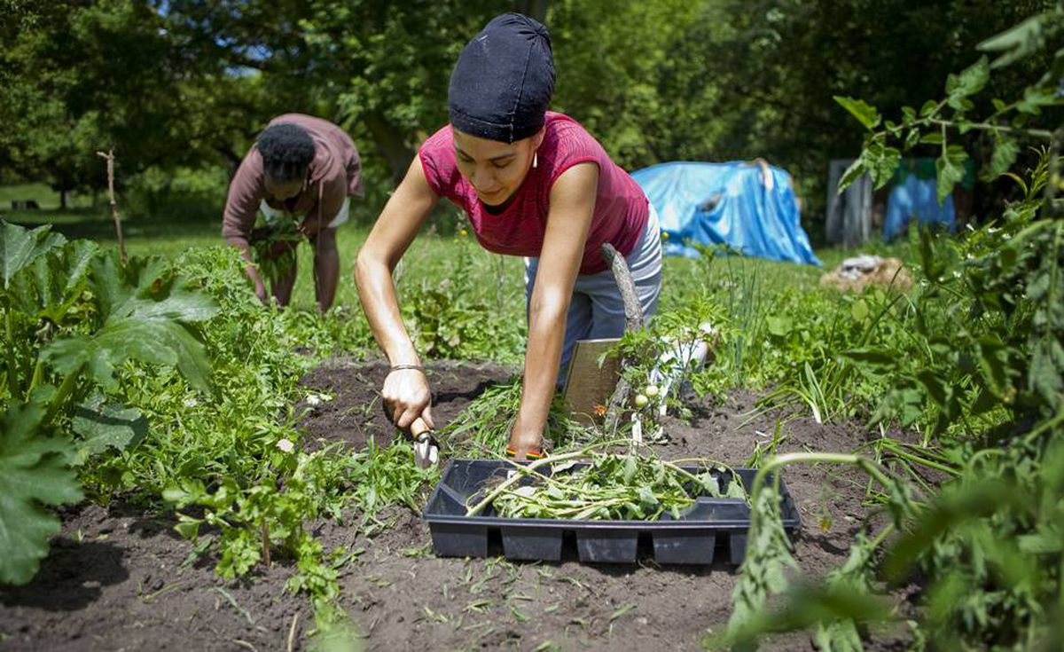 Charlyn and Erika spend a Saturday morning at the Eglinton Flats community garden. Some area residents are afraid to go out at night but many believe being more involved with the community will help push out gangs.