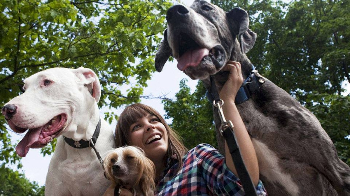 Amberly McAteer sits with Sonic, a Hairless Chinese Crested and two Great Danes, Nessa and Drake, in Berczy Park during the ninth annual Woofstock festival in Toronto on Sunday, June 12, 2011.