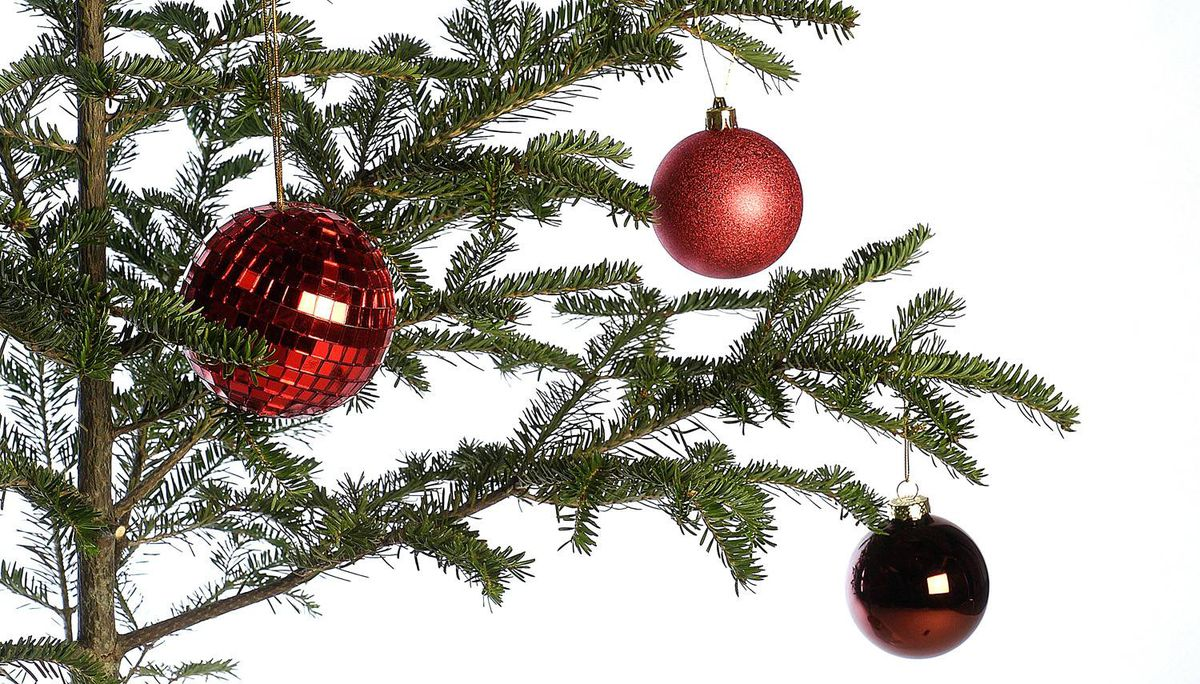 How To Pick A Christmas Tree And Keep It Alive The