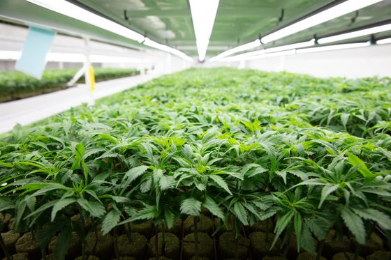 New Brunswick, and the rest of Canada, should fully privatize cannabis sales