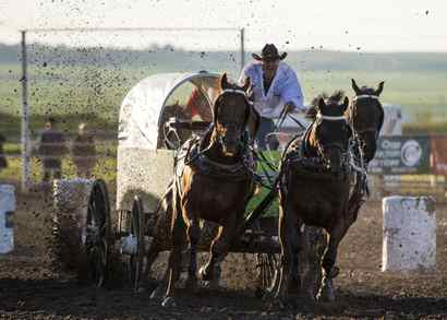 Chuckwagon Racing Legend Ready To Hand Reins To Next