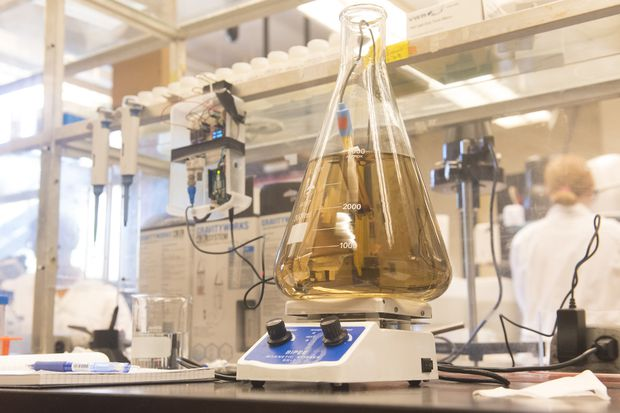 Cleantech startup programs bacteria to turn table waste into