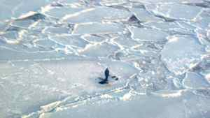 A chartered aircraft circles above a stranded teenager in Nunavut after having airdropped food supplies.