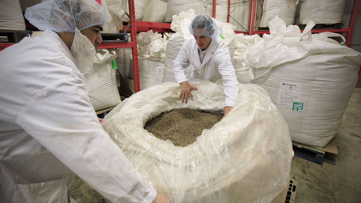 Mike Fata, right, co-founder and CEO of Manitoba Harvest Hemp Foods, inspects bag of unshelled hemp seed at the company's Winnipeg facility.
