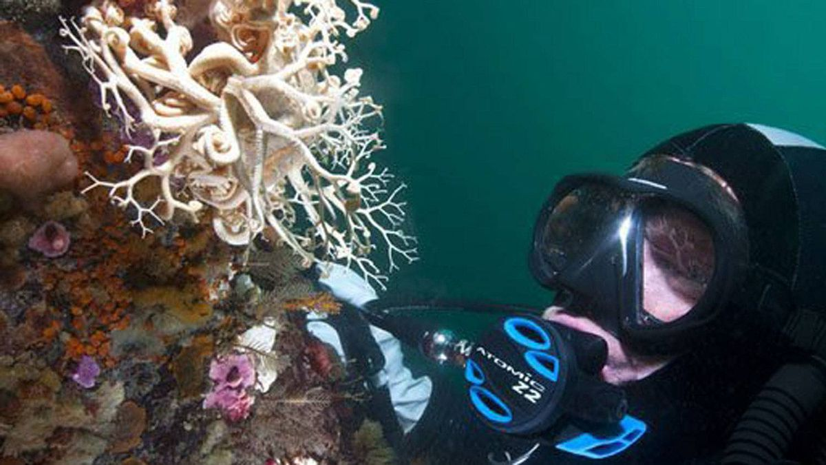 The cold waters of the Pacific teem with colour and life. Some of the most beautiful parts of B.C. lie under the surface of the ocean, say divers, who come from around the world to explore the colourful marine life.