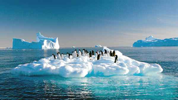 Adelie penguins drift on ice floe in the Southern Ocean off the Australian Antarctic Territory