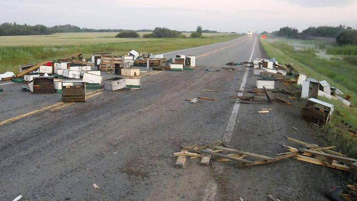 Traffic was being detoured and RCMP officers were abuzz after a trucking carrying honey bees was involved in a collision on an Alberta highway, pictured on Thursday Aug. 4, 2011