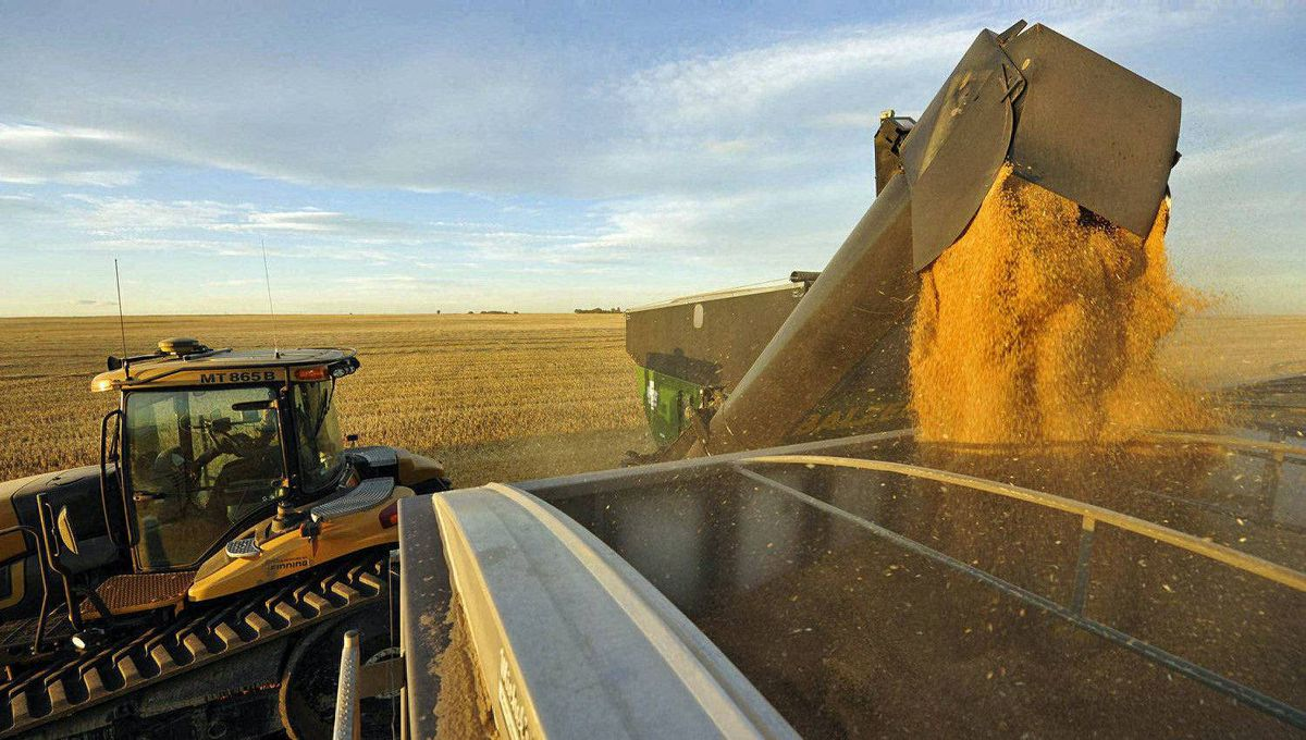 Wheat is harvested on Sept. 26, 2011, at a farm near Fort MacLeod, Alta.