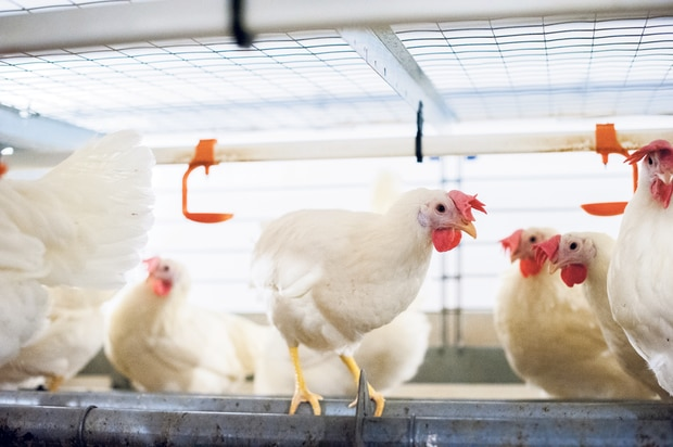 Throughout the entire production system, Canadian egg farmers have significantly improved how they manage all the inputs that go into producing eggs. Above: Canadian egg farmer Eric Dyck is among those leading the way toward a more sustainable food system by adopting new technology on their farms