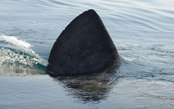 Fisheries Act makes Canada the first G20 country to ban shark-fin trade