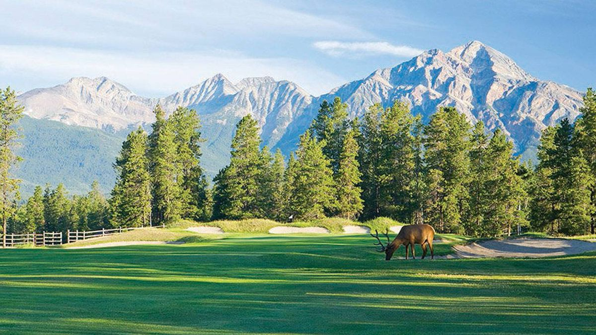 Watch out for the wildlife at Jasper National Park's golf course.