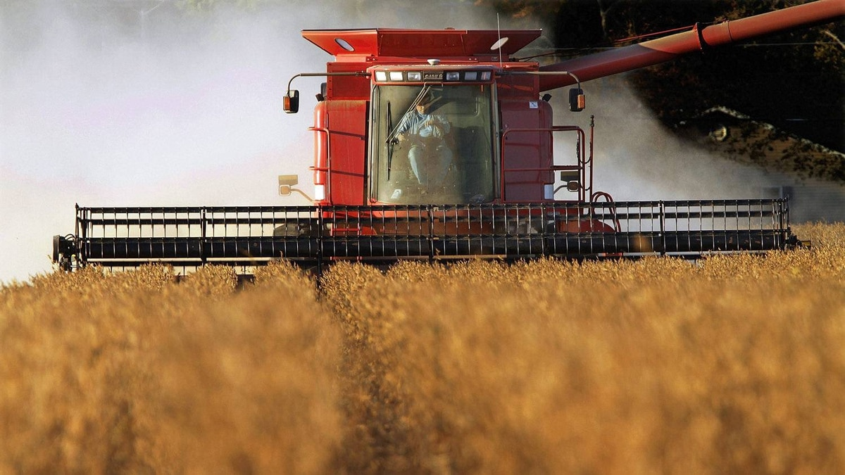 A farmer in Illinois harvests his soybean crop. Analysts say Marubeni's interest in Gavilon could be driven by a desire to grab a bigger share of the lucrative business of supplying grains to China, the world's top importer of soybeans and a fast-growing buyer of corn.