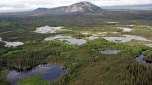 Canada's boreal forest holds half of the world's lakes larger than a square kilometre in size, and its wetlands encompass 1.2 million square kilometres.