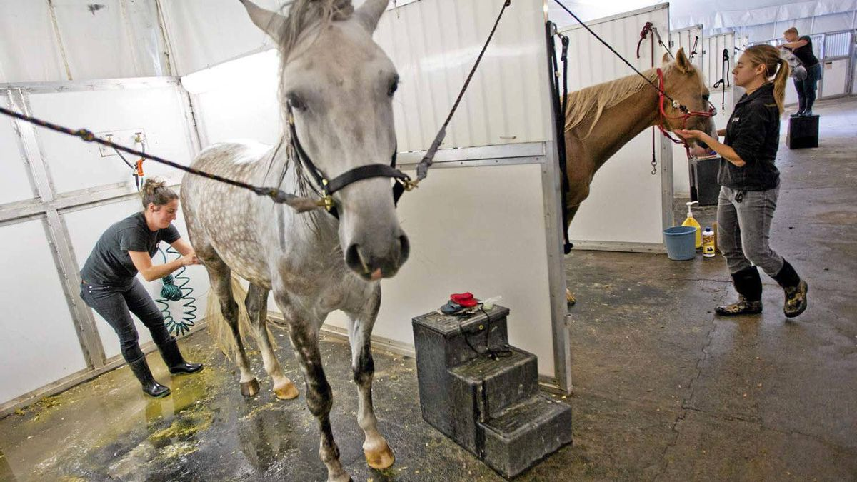 """According to the Odysseo website, the show features 69 horses, or, as they call them, """"equine performers."""""""
