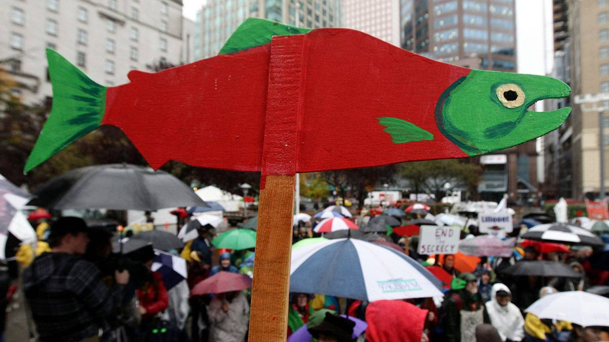 A cutout of a sockeye salmon is raised above the crowd during a demonstration to coincide with the start of the Cohen Commission Inquiry into the 2009 decline of sockeye salmon in the Fraser River, in Vancouver, B.C., on Monday October 25, 2010.