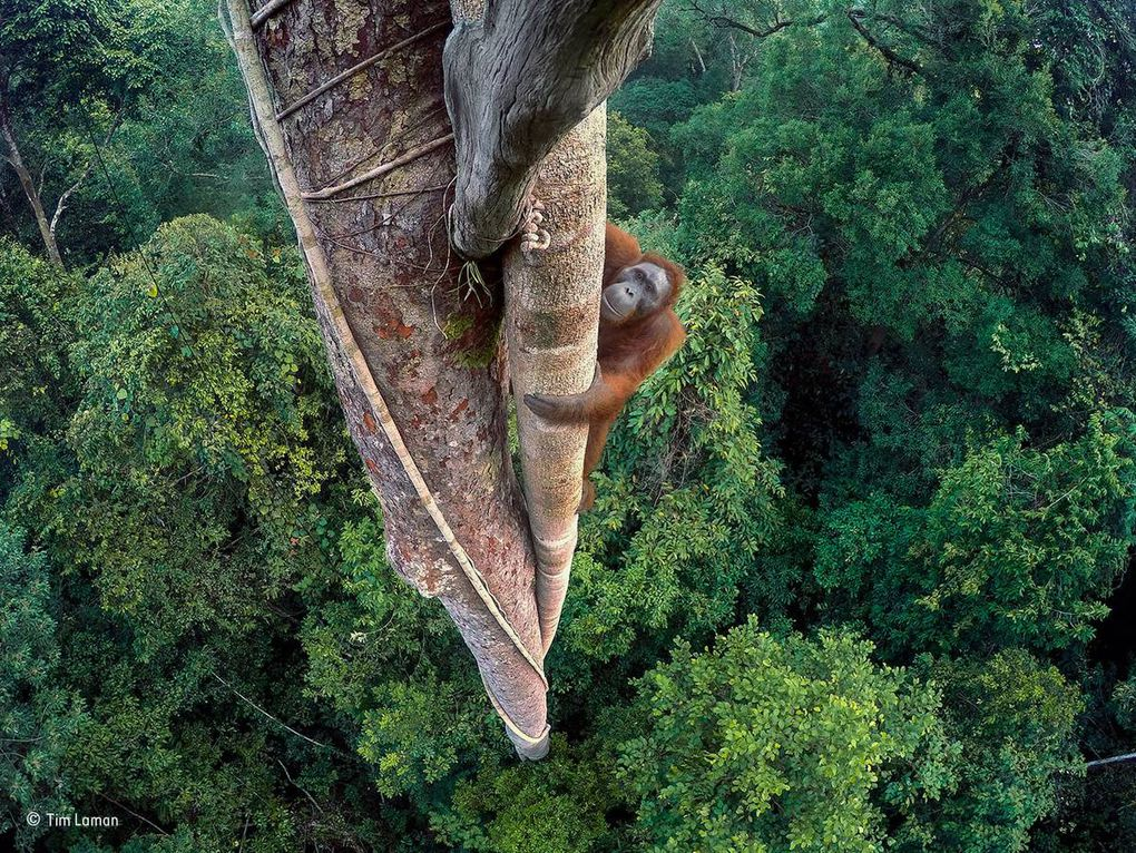 2016 Wildlife Photographer of the Year competition