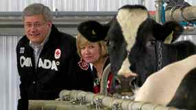 Prime Minister Stephen Harper and his wife Laureen visit a dairy farm while camapigning in Acton Vale, Que., Sunday April 10, 2011.