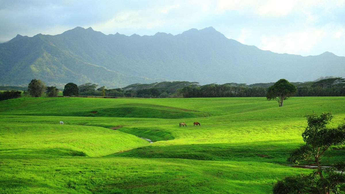 Cezary Kucharski, Edmonton: Fields in the northern part of Kauai, Hawaii.