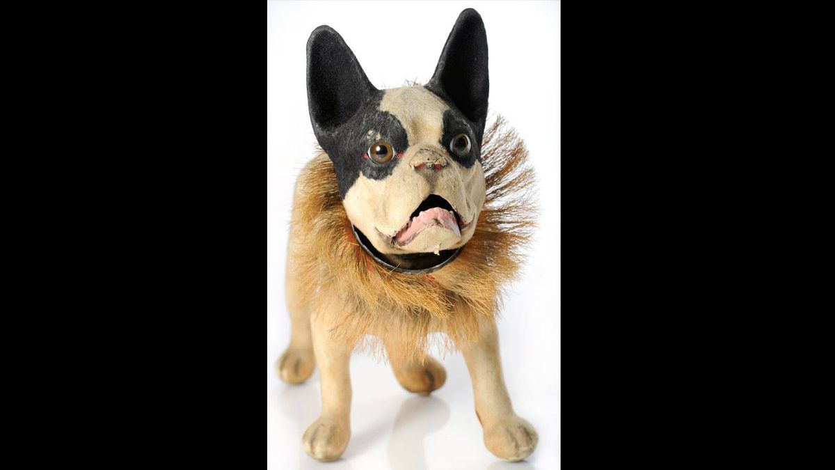 """A favoured piece: a rare French-made paper maché bulldog pull toy on wheels, with bulging eyes, a nodding head, a horsehair collar, and a barking noise when a chain is pulled, made in 1906. Ms. Cook said it is """"remarkable"""" that the fragile toy has survived"""