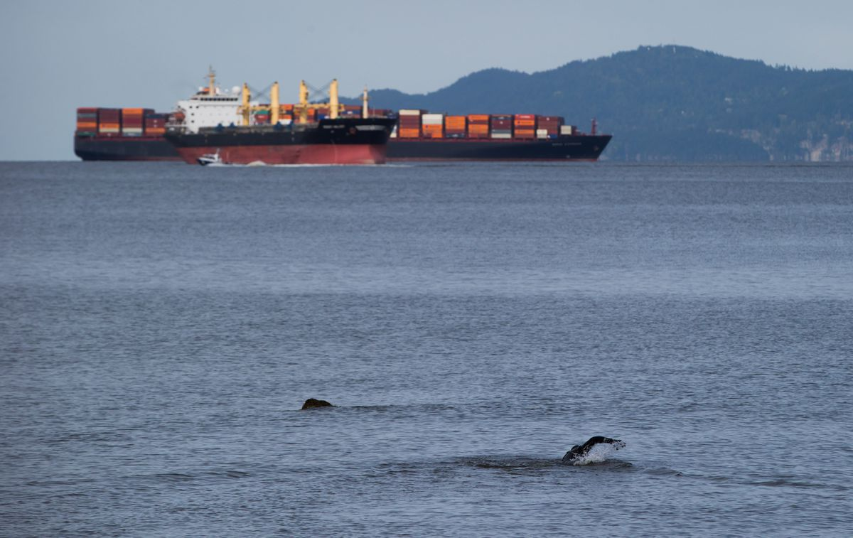 Vessel that spilled oil into Vancouver's English Bay acquitted on all charges