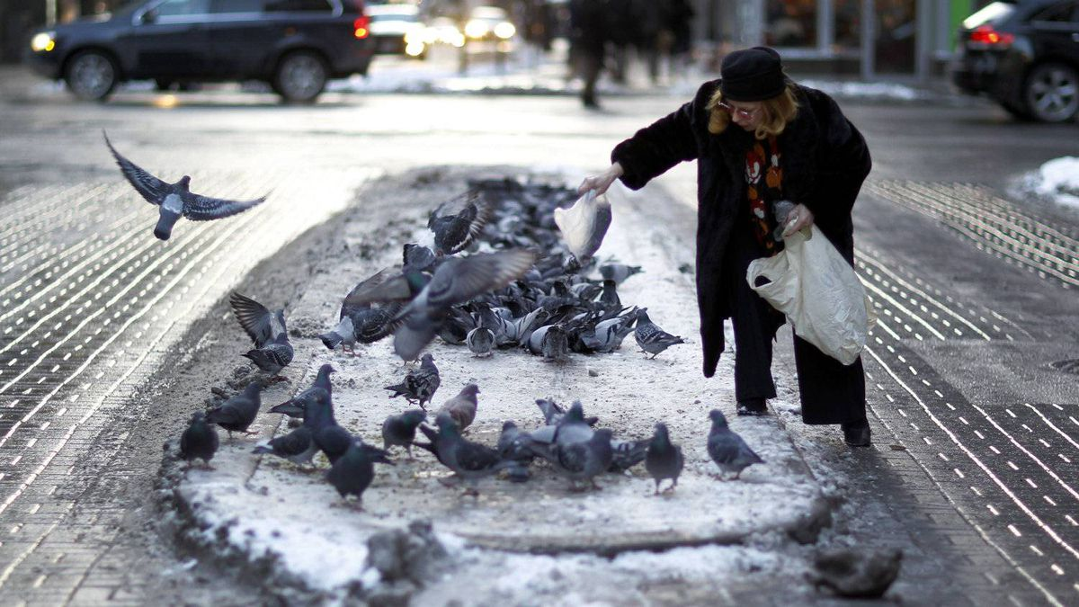 An unidentified woman feeds some pigeons in on Jan. 10, 2011.