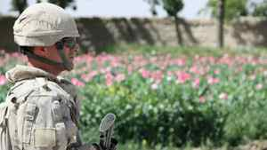 Canadian Sgt. Charles Cote walks past a field of poppies deep in southern Afghanistan's Panjwaii district on Sunday, April 17, 2011.