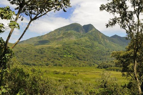 Global forest-protection plan depends on carbon credits