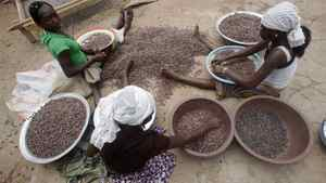 Girls work on cocoa beans in Sankadiokrou near Abengourou, Ivory Coast, Nov. 21, 2011. Nestle is investigating child labour practices in the African nation, which accounts for one-third of global cocoa production, and 10 per cent of Nestlé's supplies.