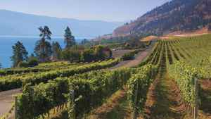The story of CedarCreek is rooted in the vision of Senator Ross Fitzpatrick. Born and raised in the Okanagan, he worked his way through university in the orchards and fruit packing houses that dotted this valley. Today under his son Gordon's leadership CedarCreek has raised the bar on producing wine.