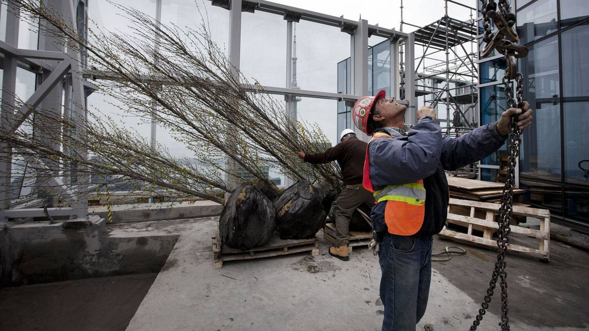 Workers in Toronto plant trees on the roof of a new hotel in this photo from May 1. Earnings in Ontario were up just 0.1 per cent in March, to $896.61 a week, from a year ago, Statistics Canada's payrolls data show. That's far below the rate of annual inflation for that month of 1.9 per cent.