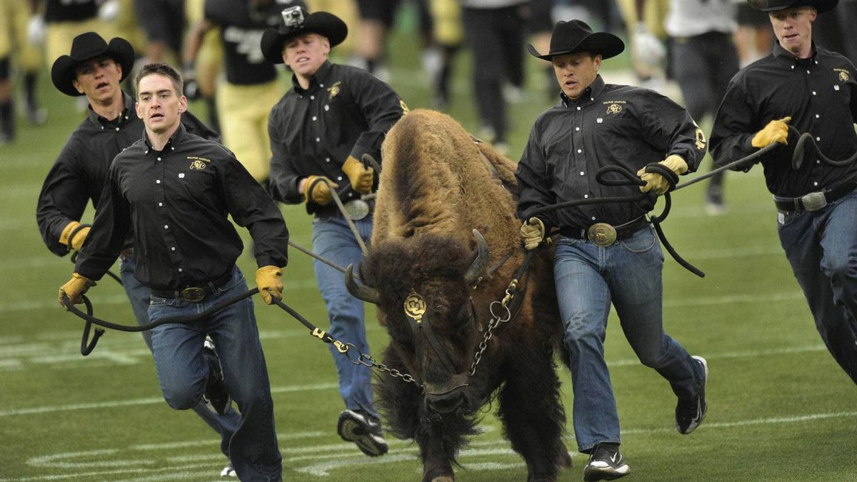 Handlers struggled to keep up with Ralphie as she ran onto the field Saturday night in Boulder. The University of Colorado football team scrimmaged Saturday night, April 14, 2012 during a practice session open to the public at Folsom Field. (AP Photo/Karl Gehring, The Denver Post)
