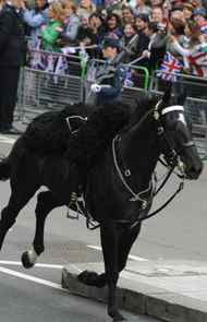 Even riderless horses hurried to Westminster Abbey.