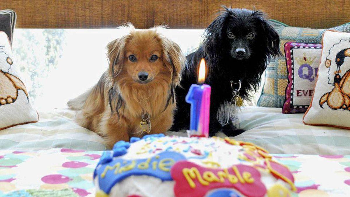 Doggie Birthday Cake Amazon
