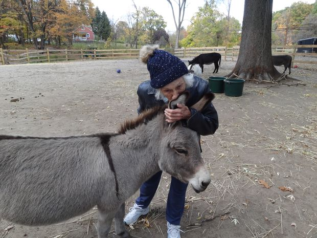 All eyes and ears, mini donkeys offer comfort to kids in therapy