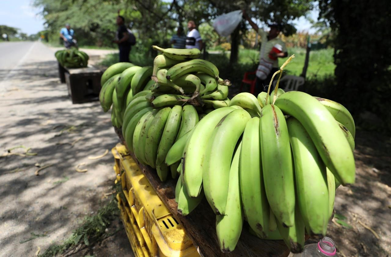 Going bananas: Is the fruit we know and love going extinct?