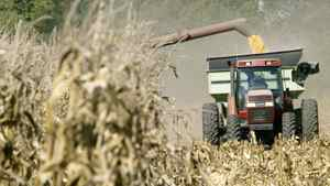 Corn being harvested in Kansas