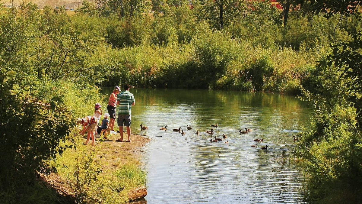 Lee Gunderson photo: Feeding ducks at the pond - A family favorite for us. Frogs, dragon flys and lots of ducks