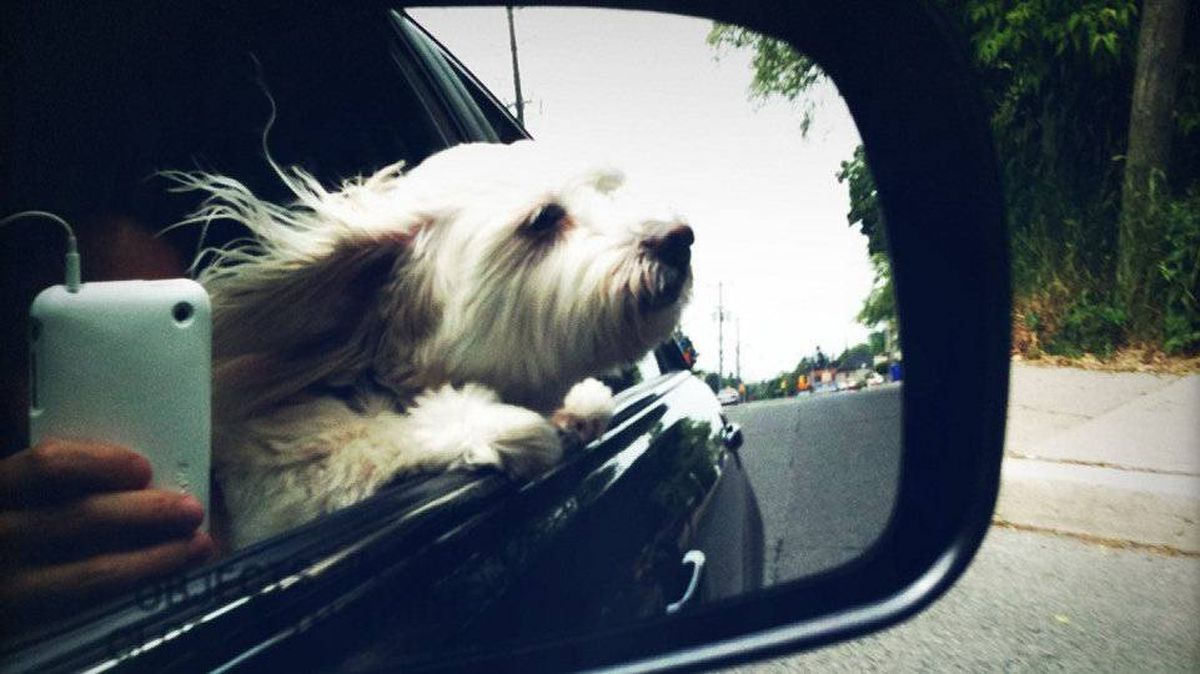 From Sydney Chun in Toronto: My parents' 12 year old pooch, Gigi and myself out for a ride on a sunny afternoon.