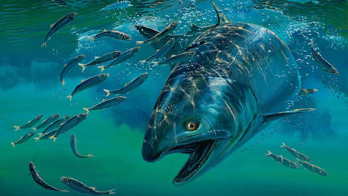 """A detail of a painting by B.C. artist, Mark Hobson, called """"Surface Tension"""". It was the winner of the Pacific Salmon Conservation Stamp art competition and depicts a Chinook salmon feeding on herring."""