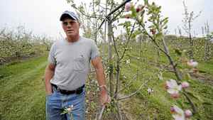 Fred Archibald, owner of Archibald's Orchard and Estate Winery is photographed amongst his apple orchard on May 7 2012. The unseasonal weather experienced in southern Ontario may have a devastating effect on apple orchards.